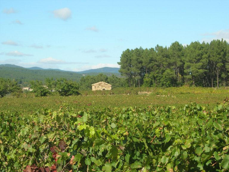 rosieres-vignes